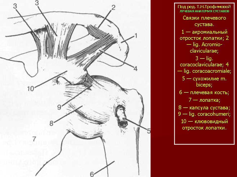Лекартство для хрящей суставов-арщн вальгусная деформация коленных суставов у ребенка фото