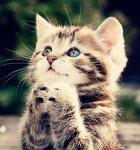 Mila85 аватар