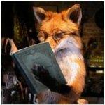 foxgk1983 аватар