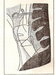 Иллюстрация 2.