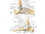 anatomy276.jpg