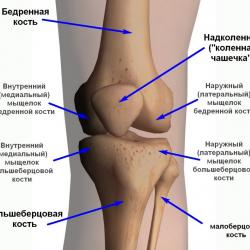 Ширина суставной щели коленного сустава