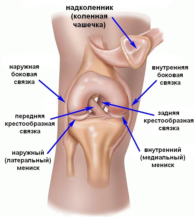 Боль в области коленного и плечевого суставов (алгоритмы дифференциальной диагностики). клиническое руководство для практических врачей